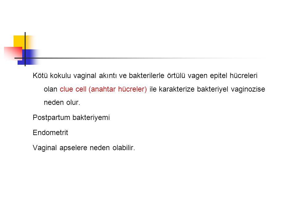 Kötü kokulu vaginal akıntı ve bakterilerle örtülü vagen epitel hücreleri olan clue cell (anahtar hücreler) ile karakterize bakteriyel vaginozise neden