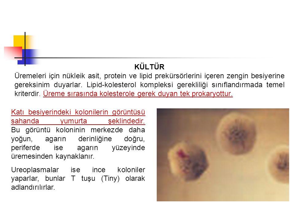 KÜLTÜR Üremeleri için nükleik asit, protein ve lipid prekürsörlerini içeren zengin besiyerine gereksinim duyarlar. Lipid-kolesterol kompleksi gereklil