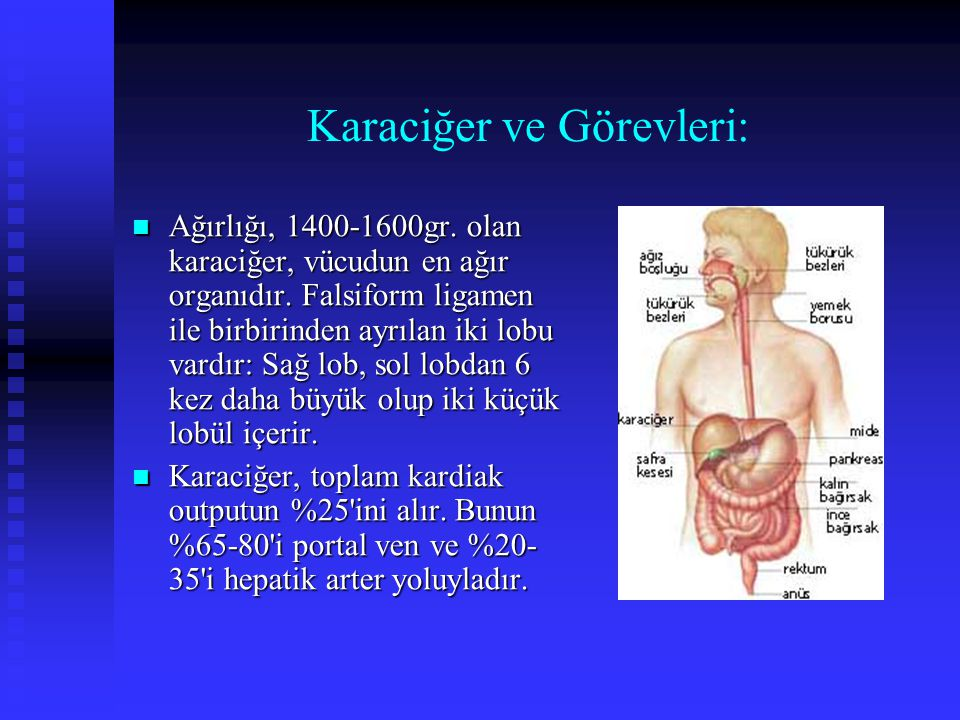 Karaciğer ve Görevleri: Ağırlığı, 1400-1600gr. olan karaciğer, vücudun en ağır organıdır. Falsiform ligamen ile birbirinden ayrılan iki lobu vardır: S
