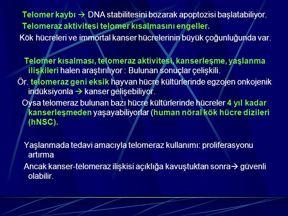 Telomer kaybı  DNA stabilitesini bozarak apoptozisi başlatabiliyor. Telomeraz aktivitesi telomer kısalmasını engeller. Kök hücreleri ve immortal kans
