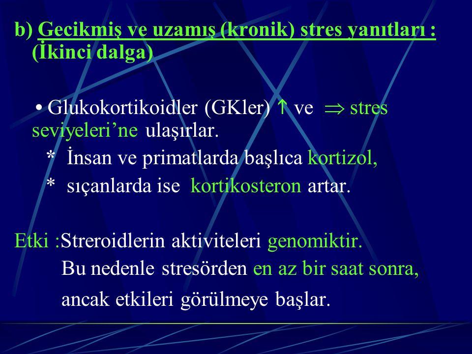 b) Gecikmiş ve uzamış (kronik) stres yanıtları : (İkinci dalga) Glukokortikoidler (GKler)  ve  stres seviyeleri'ne ulaşırlar. * İnsan ve primatlarda