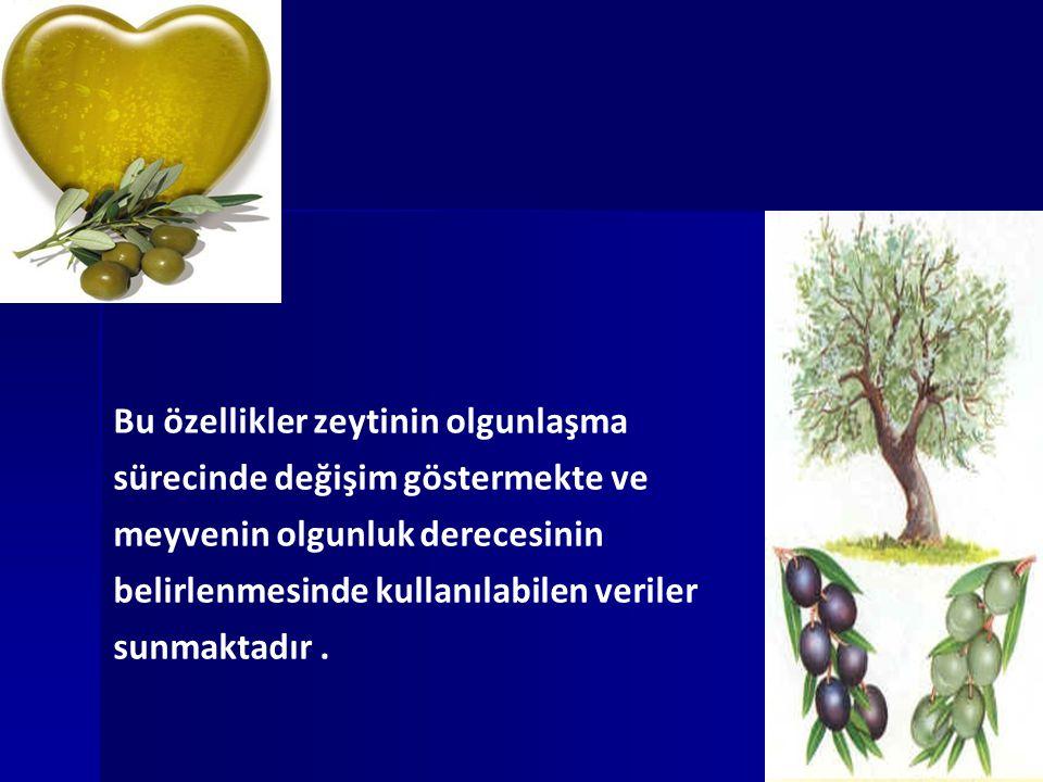 Bu özellikler zeytinin olgunlaşma sürecinde değişim göstermekte ve meyvenin olgunluk derecesinin belirlenmesinde kullanılabilen veriler sunmaktadır.