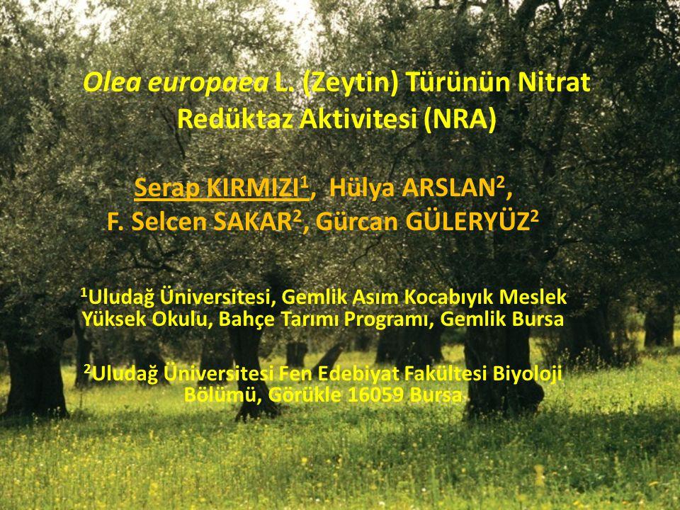 Olea europaea L. (Zeytin) Türünün Nitrat Redüktaz Aktivitesi (NRA) Serap KIRMIZI 1, Hülya ARSLAN 2, F. Selcen SAKAR 2, Gürcan GÜLERYÜZ 2 1 Uludağ Üniv