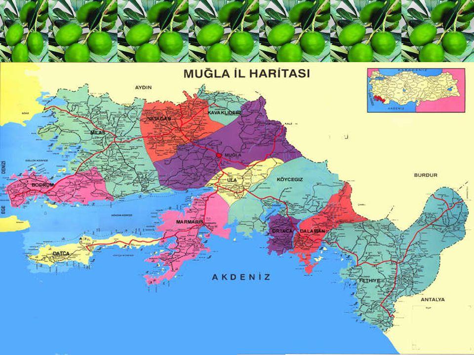 Giriş Muğla İli, doğal güzellikleri ve kültürel zenginliği ile Turizm ve Kültür kenti olmasının yanında, iç kesimde ılıman iklim, sahil kesimlerde subtropik iklim yapısı ve 1124 km.lik kıyı şeridiyle önemli bir tarımsal potansiyele sahiptir.