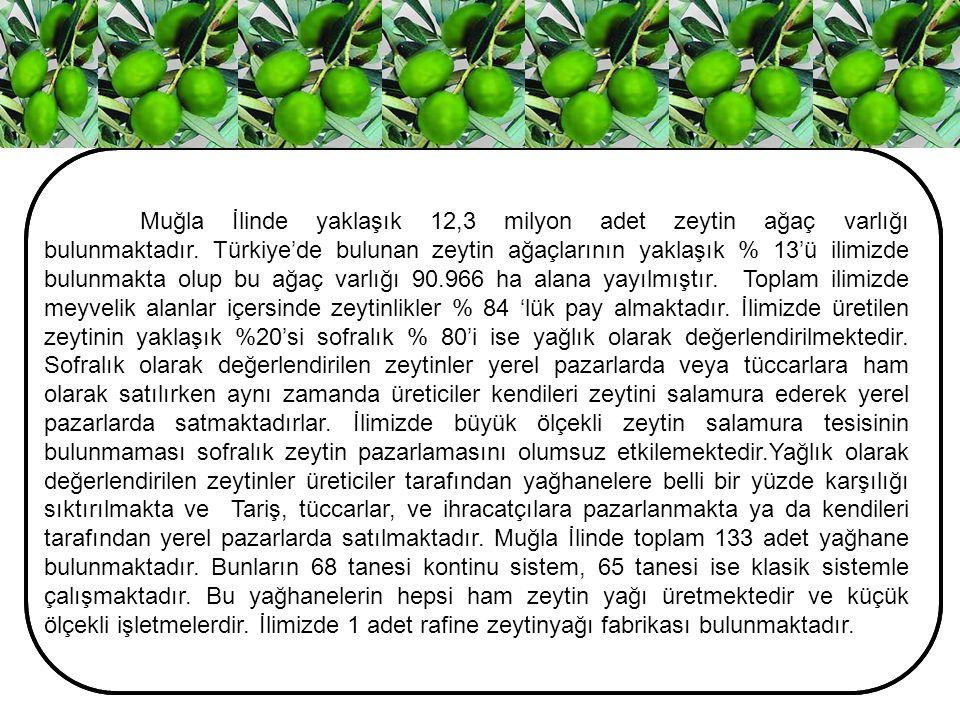 Muğla İlinde yaklaşık 12,3 milyon adet zeytin ağaç varlığı bulunmaktadır. Türkiye'de bulunan zeytin ağaçlarının yaklaşık % 13'ü ilimizde bulunmakta ol