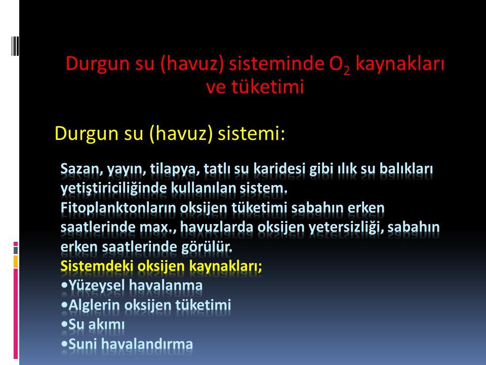 Durgun su (havuz) sisteminde O 2 kaynakları ve tüketimi Durgun su (havuz) sistemi: