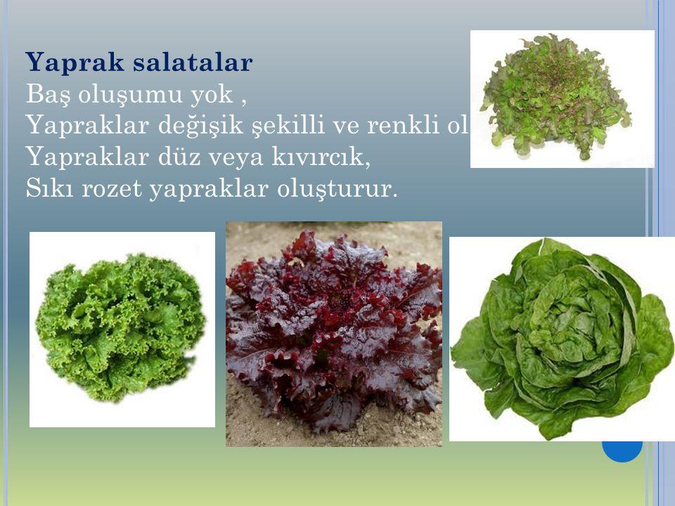 Yaprak salatalar Baş oluşumu yok, Yapraklar değişik şekilli ve renkli olabilir Yapraklar düz veya kıvırcık, Sıkı rozet yapraklar oluşturur.