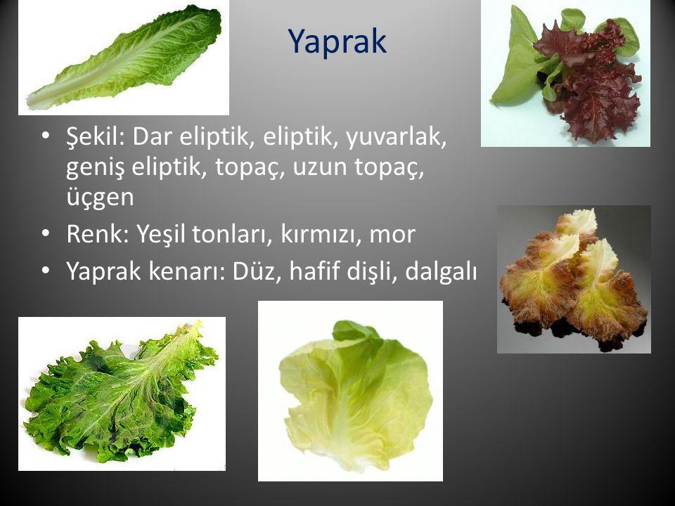 Yaprak Şekil: Dar eliptik, eliptik, yuvarlak, geniş eliptik, topaç, uzun topaç, üçgen Renk: Yeşil tonları, kırmızı, mor Yaprak kenarı: Düz, hafif dişl