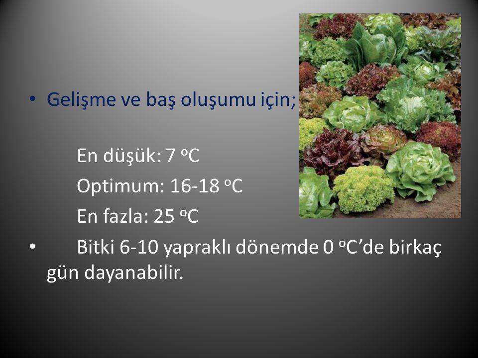 Gelişme ve baş oluşumu için; En düşük: 7 o C Optimum: 16-18 o C En fazla: 25 o C Bitki 6-10 yapraklı dönemde 0 o C'de birkaç gün dayanabilir.