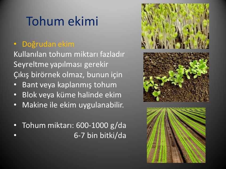 Tohum ekimi Doğrudan ekim Kullanılan tohum miktarı fazladır Seyreltme yapılması gerekir Çıkış birörnek olmaz, bunun için Bant veya kaplanmış tohum Blo