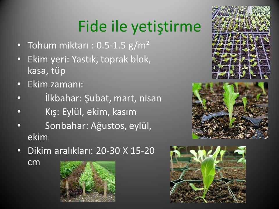 Fide ile yetiştirme Tohum miktarı : 0.5-1.5 g/m² Ekim yeri: Yastık, toprak blok, kasa, tüp Ekim zamanı: İlkbahar: Şubat, mart, nisan Kış: Eylül, ekim,