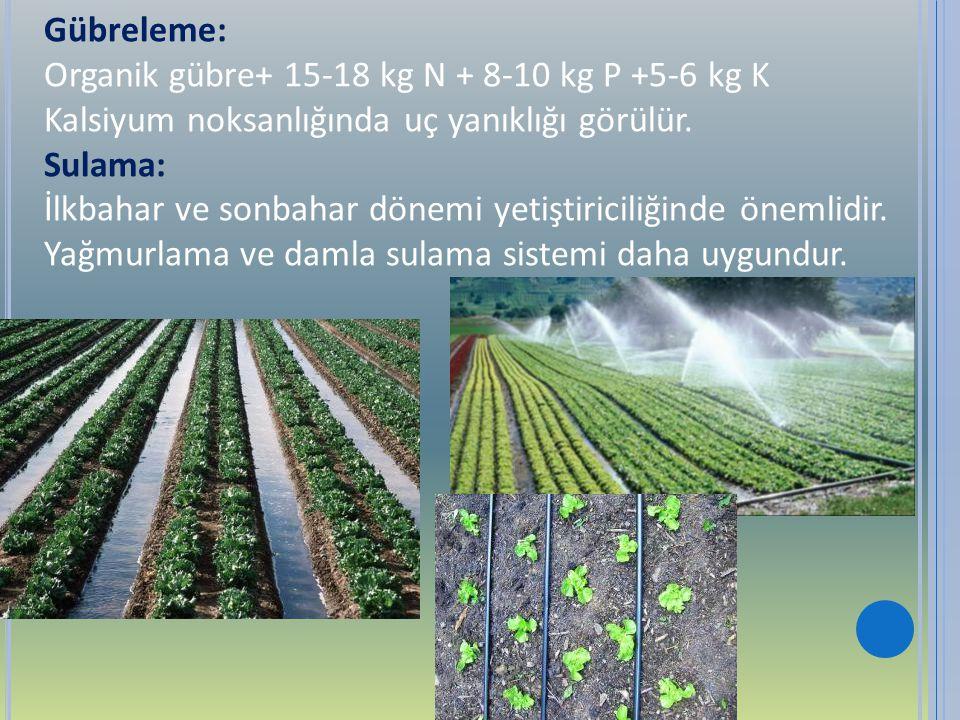 Gübreleme: Organik gübre+ 15-18 kg N + 8-10 kg P +5-6 kg K Kalsiyum noksanlığında uç yanıklığı görülür. Sulama: İlkbahar ve sonbahar dönemi yetiştiric