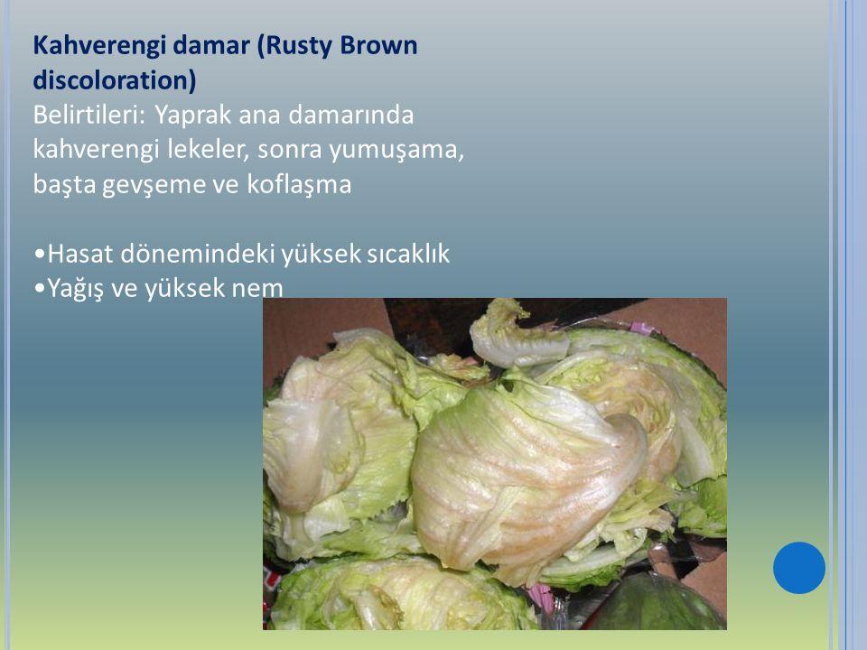 Kahverengi damar (Rusty Brown discoloration) Belirtileri: Yaprak ana damarında kahverengi lekeler, sonra yumuşama, başta gevşeme ve koflaşma Hasat dön