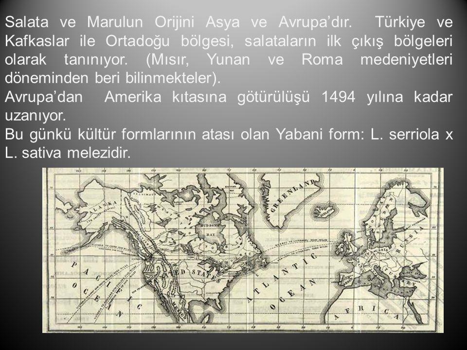 Salata ve Marulun Orijini Asya ve Avrupa'dır. Türkiye ve Kafkaslar ile Ortadoğu bölgesi, salataların ilk çıkış bölgeleri olarak tanınıyor. (Mısır, Yun