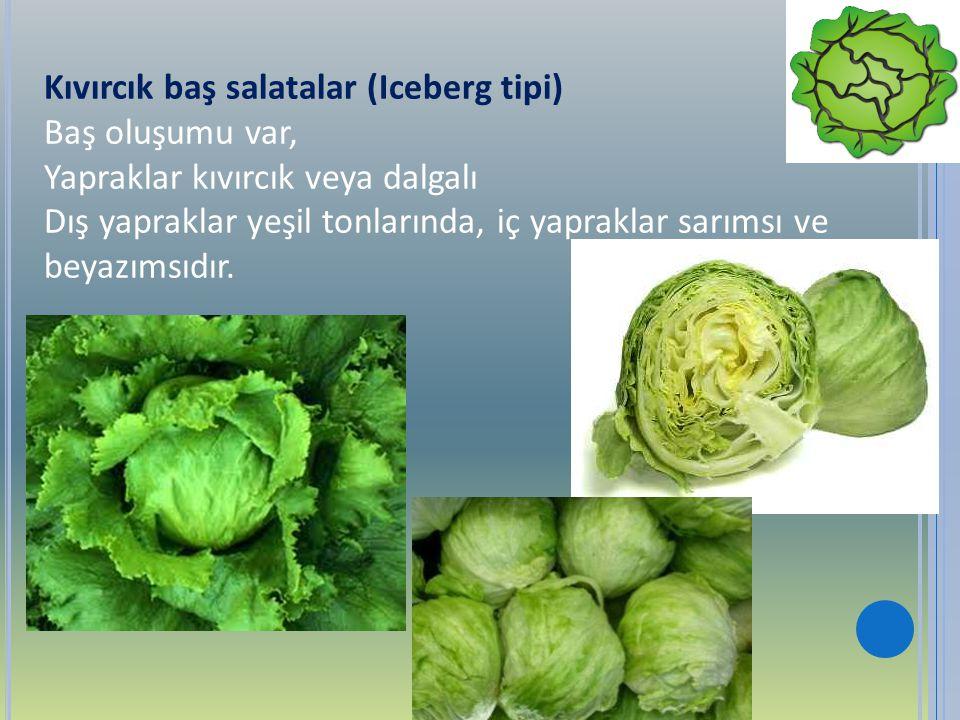 Kıvırcık baş salatalar (Iceberg tipi) Baş oluşumu var, Yapraklar kıvırcık veya dalgalı Dış yapraklar yeşil tonlarında, iç yapraklar sarımsı ve beyazım