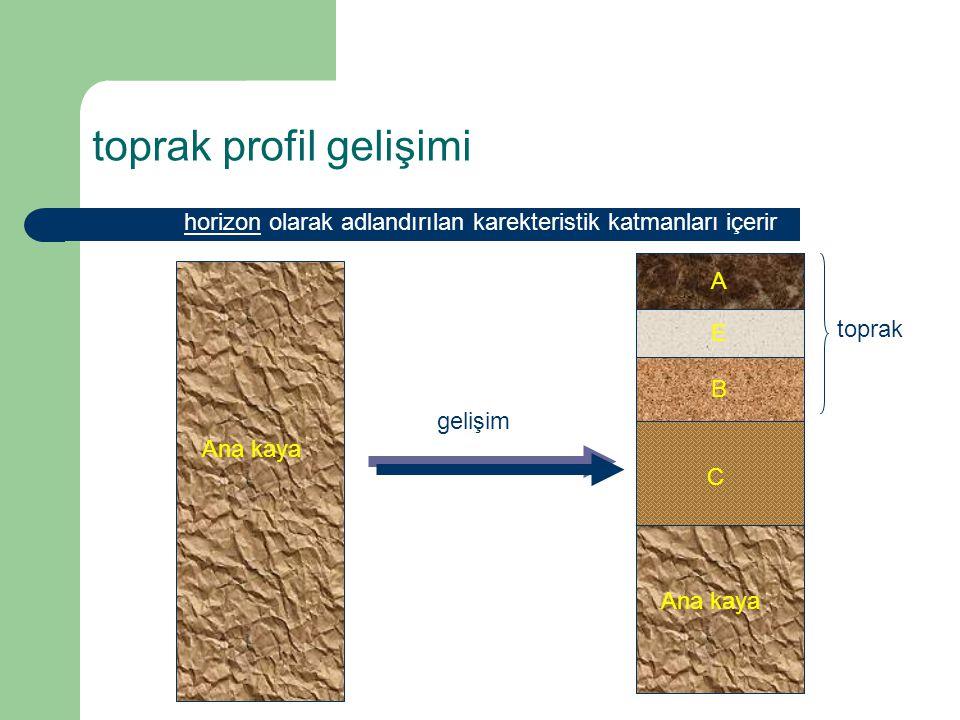 horizon olarak adlandırılan karekteristik katmanları içerir A E B C Ana kaya toprak gelişim toprak profil gelişimi
