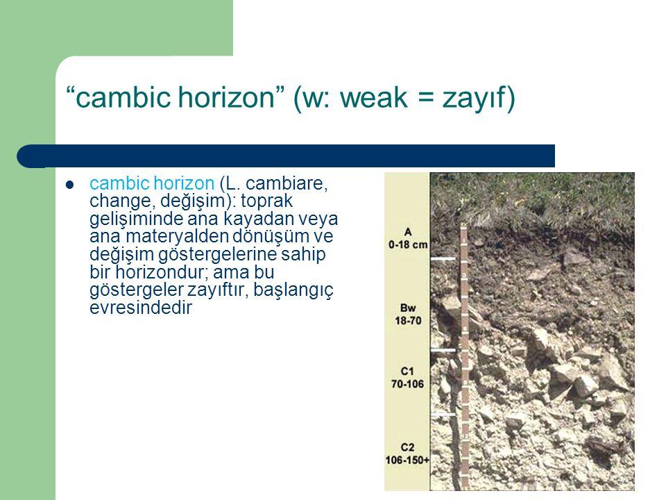 """""""cambic horizon"""" (w: weak = zayıf) cambic horizon (L. cambiare, change, değişim): toprak gelişiminde ana kayadan veya ana materyalden dönüşüm ve değiş"""
