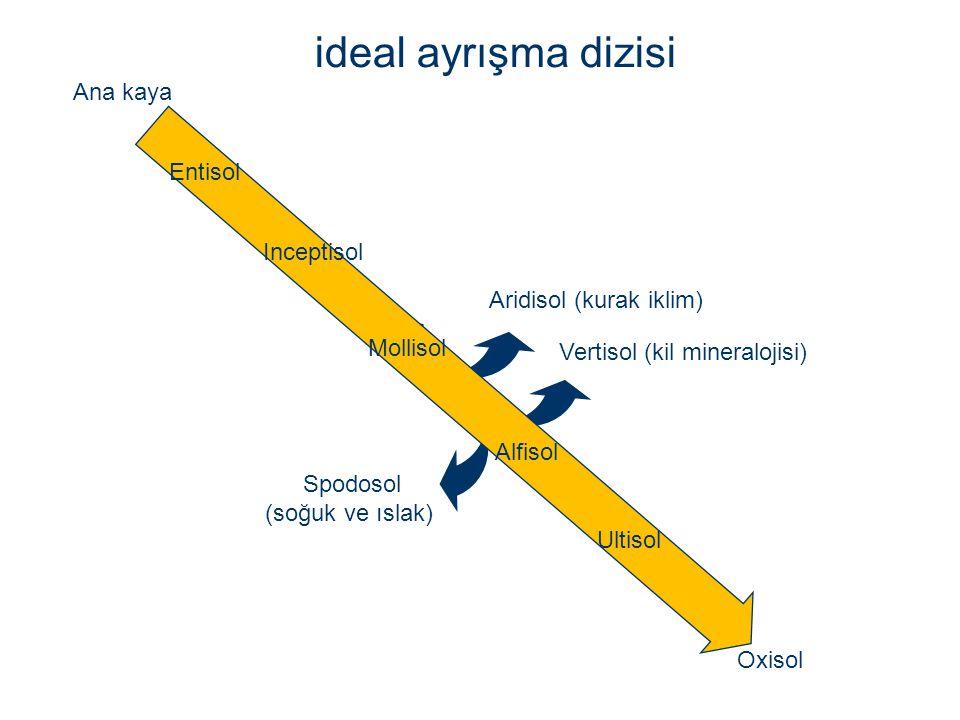 Ana kaya Entisol Inceptisol Alfisol Ultisol Oxisol Mollisol Spodosol (soğuk ve ıslak) Aridisol (kurak iklim) Vertisol (kil mineralojisi) ideal ayrışma