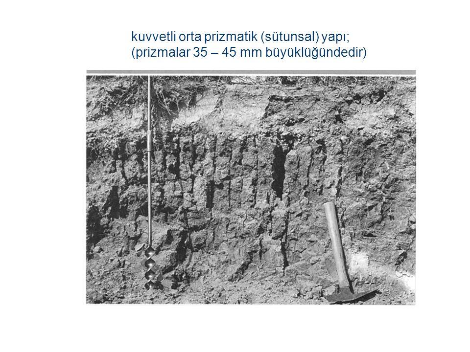 kuvvetli orta prizmatik (sütunsal) yapı; (prizmalar 35 – 45 mm büyüklüğündedir)