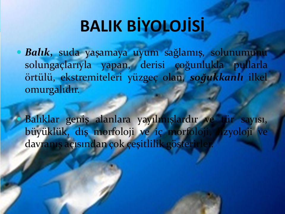 BALIK BİYOLOJİSİ Balık, suda yaşamaya uyum sağlamış, solunumunu solungaçlarıyla yapan, derisi çoğunlukla pullarla örtülü, ekstremiteleri yüzgeç olan, soğukkanlı ilkel omurgalıdır.