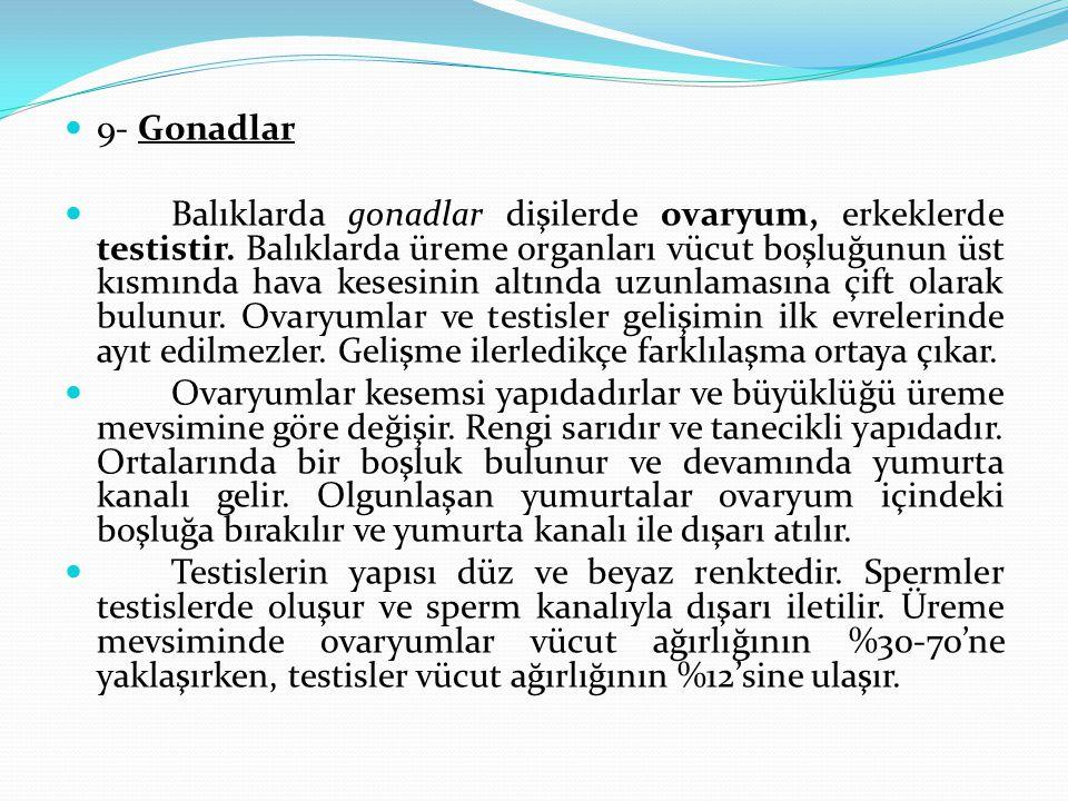 9- Gonadlar Balıklarda gonadlar dişilerde ovaryum, erkeklerde testistir.