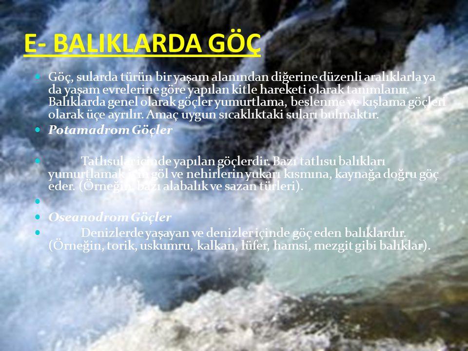 E- BALIKLARDA GÖÇ Göç, sularda türün bir yaşam alanından diğerine düzenli aralıklarla ya da yaşam evrelerine göre yapılan kitle hareketi olarak tanımlanır.