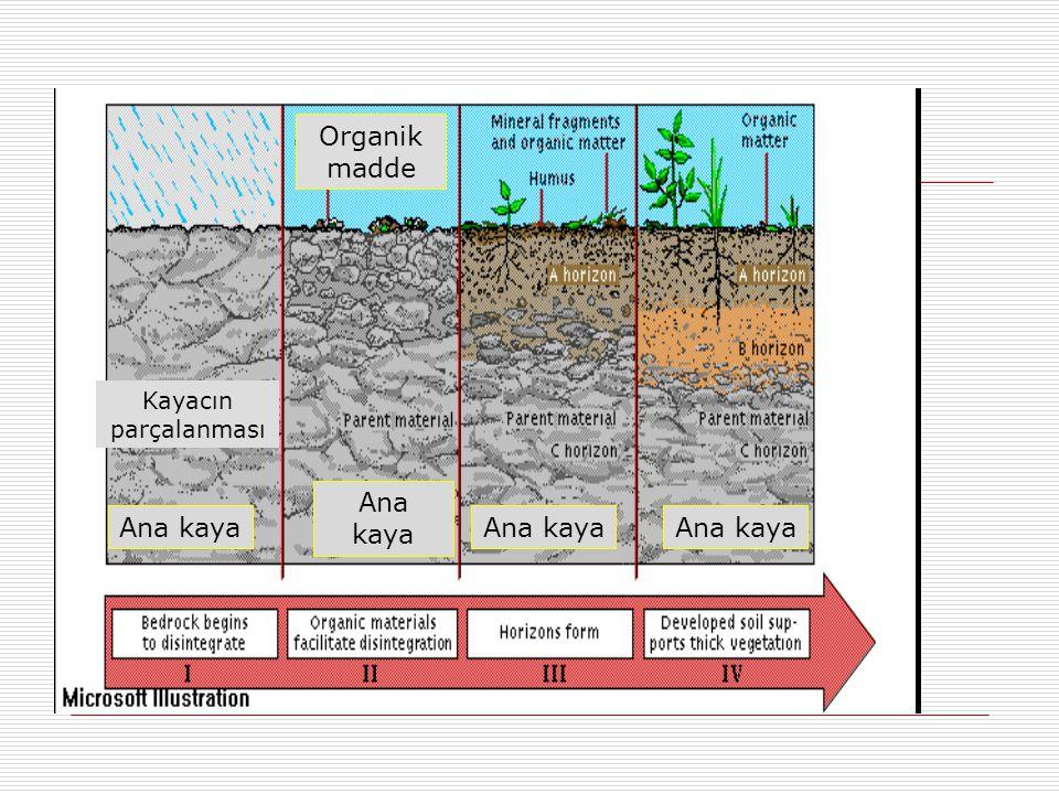 Kayacın parçalanması Ana kaya Organik madde Ana kaya