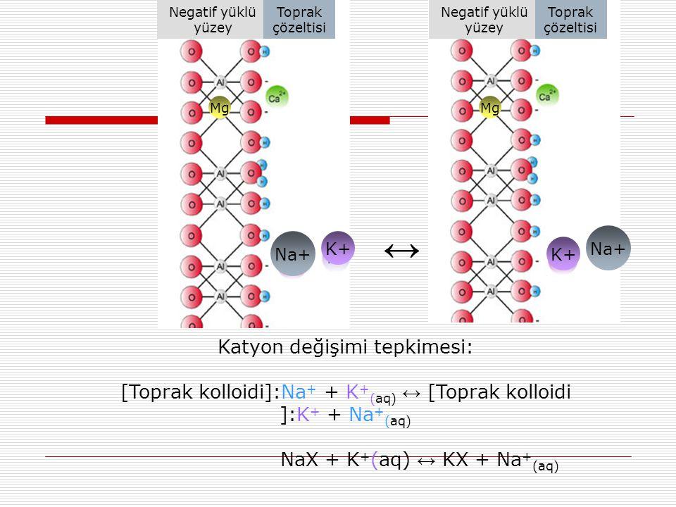 Na+ Mg Na+ K+ Katyon değişimi tepkimesi: [Toprak kolloidi]:Na + + K + (aq) ↔ [Toprak kolloidi ]:K + + Na + (aq) NaX + K + (aq) ↔ KX + Na + (aq) ↔ Nega