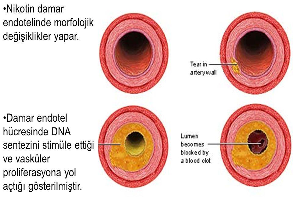 Nikotin damar endotelinde morfolojik değişiklikler yapar. Damar endotel hücresinde DNA sentezini stimüle ettiği ve vasküler proliferasyona yol açtığı