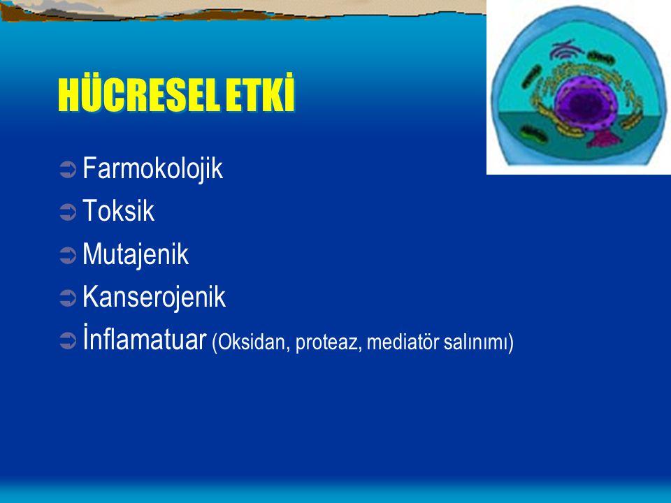 HÜCRESEL ETKİ  Farmokolojik  Toksik  Mutajenik  Kanserojenik  İnflamatuar (Oksidan, proteaz, mediatör salınımı)