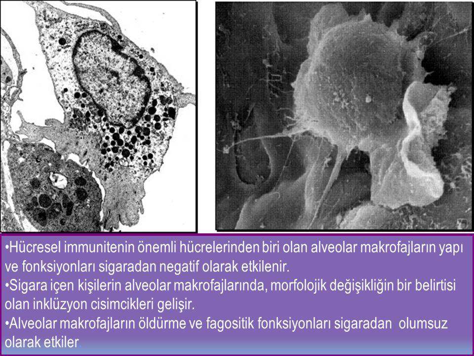 Hücresel immunitenin önemli hücrelerinden biri olan alveolar makrofajların yapı ve fonksiyonları sigaradan negatif olarak etkilenir. Sigara içen kişil