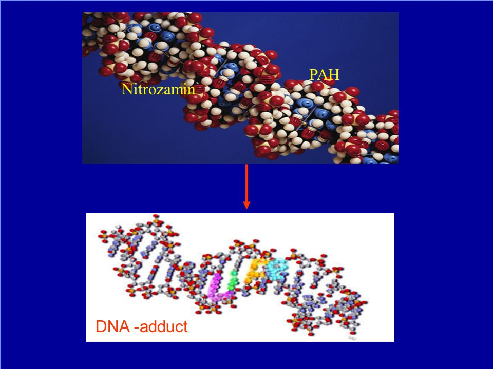 Nitrozamin PAH DNA -adduct