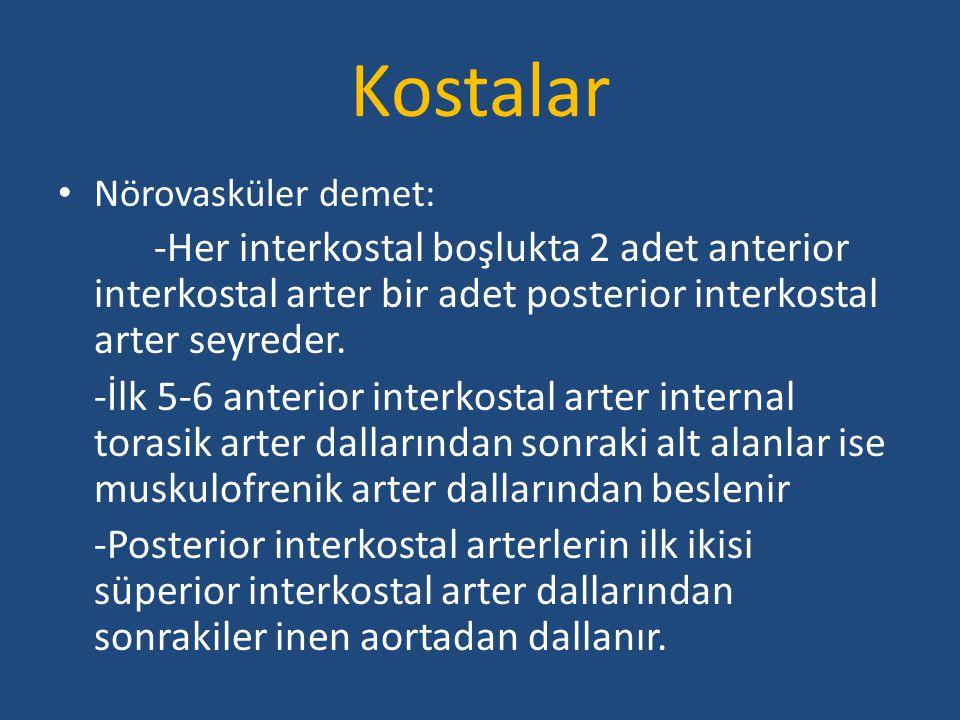Kostalar Nörovasküler demet: -Her interkostal boşlukta 2 adet anterior interkostal arter bir adet posterior interkostal arter seyreder. -İlk 5-6 anter