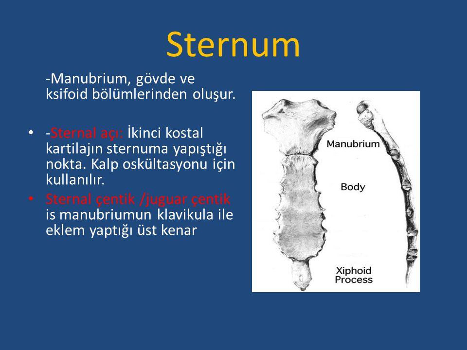 Sternum -Manubrium, gövde ve ksifoid bölümlerinden oluşur. -Sternal açı: İkinci kostal kartilajın sternuma yapıştığı nokta. Kalp oskültasyonu için kul