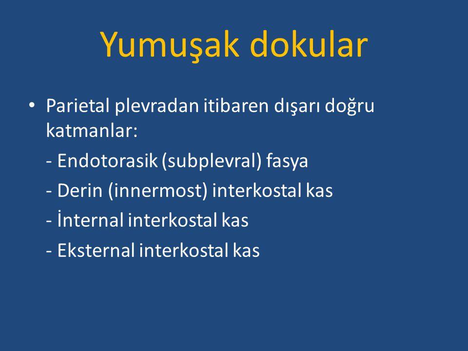 Yumuşak dokular Parietal plevradan itibaren dışarı doğru katmanlar: - Endotorasik (subplevral) fasya - Derin (innermost) interkostal kas - İnternal in