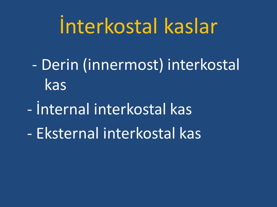 İnterkostal kaslar - Derin (innermost) interkostal kas - İnternal interkostal kas - Eksternal interkostal kas