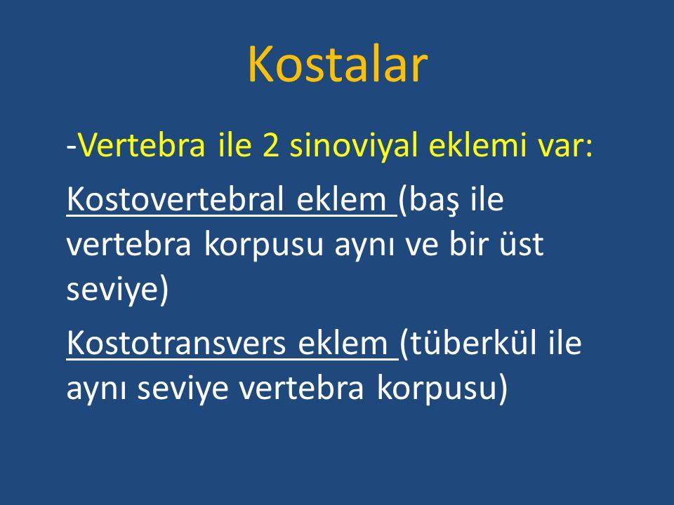Kostalar -Vertebra ile 2 sinoviyal eklemi var: Kostovertebral eklem (baş ile vertebra korpusu aynı ve bir üst seviye) Kostotransvers eklem (tüberkül i