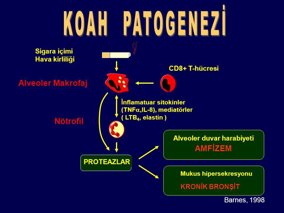Barnes, 1998 Sigara içimi Hava kirliliği Alveoler Makrofaj Nötrofil PROTEAZLAR CD8+ T-hücresi Alveoler duvar harabiyeti AMFİZEM İnflamatuar sitokinler
