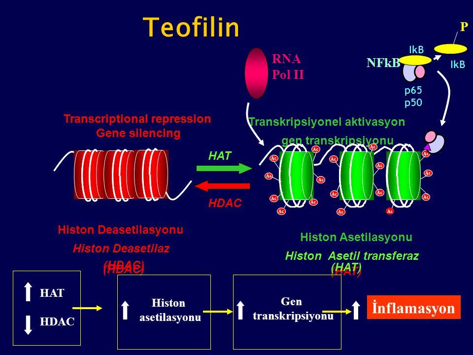 (HDAC) Histon Deasetilasyonu Histon Deasetilaz (HDAC) Transcriptional repression Gene silencing Transcriptional repression Gene silencing Transkripsiy