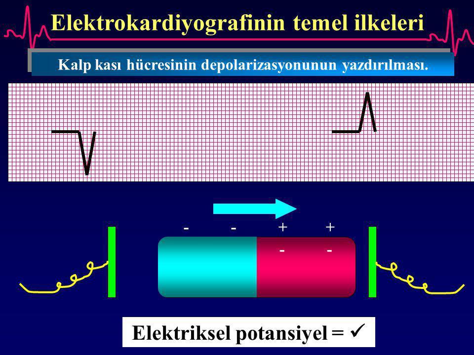 Elektrokardiyografinin temel ilkeleri --++--++ ++--++-- Elektriksel potansiyel = Kalp kası hücresinin depolarizasyonunun yazdırılması.