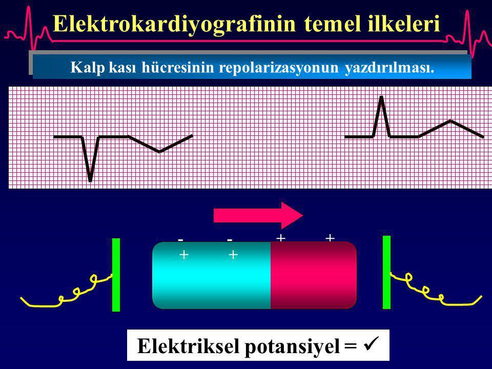 Elektrokardiyografinin temel ilkeleri Kalp kası hücresinin repolarizasyonun yazdırılması. Elektriksel potansiyel = --++--++ ++--++--