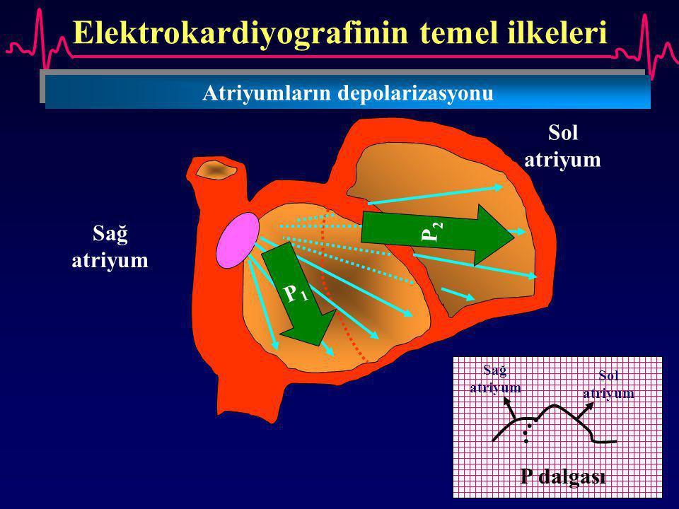Elektrokardiyografinin temel ilkeleri Atriyumların depolarizasyonu Sağ atriyum Sol atriyum P1P1 P2P2 Sağ atriyum Sol atriyum P dalgası
