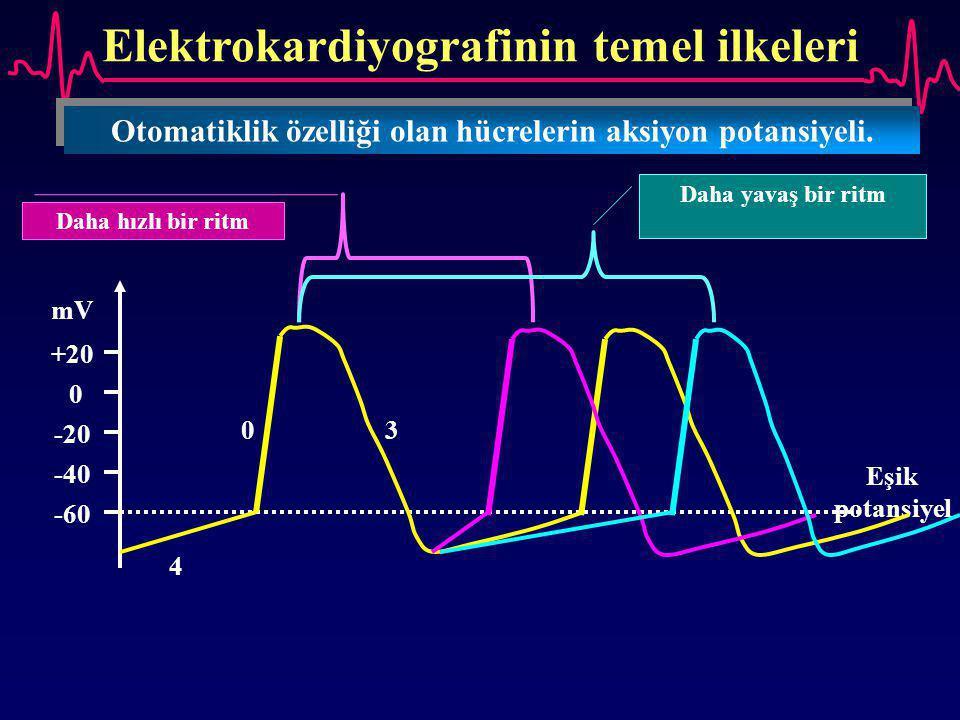 Elektrokardiyografinin temel ilkeleri Otomatiklik özelliği olan hücrelerin aksiyon potansiyeli. -60 -40 -20 0 +20 mV Eşik potansiyel 4 0 3 Daha hızlı