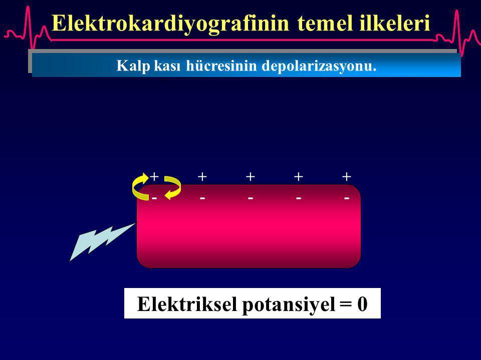 Elektrokardiyografinin temel ilkeleri Kalp kası hücresinin depolarizasyonu. ++++++++++ ---------- Elektriksel potansiyel = 0