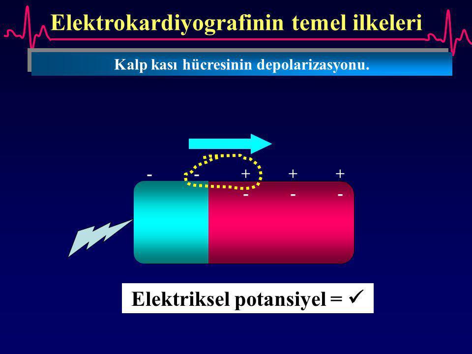 Elektrokardiyografinin temel ilkeleri Kalp kası hücresinin depolarizasyonu. --+++--+++ ++---++--- Elektriksel potansiyel =