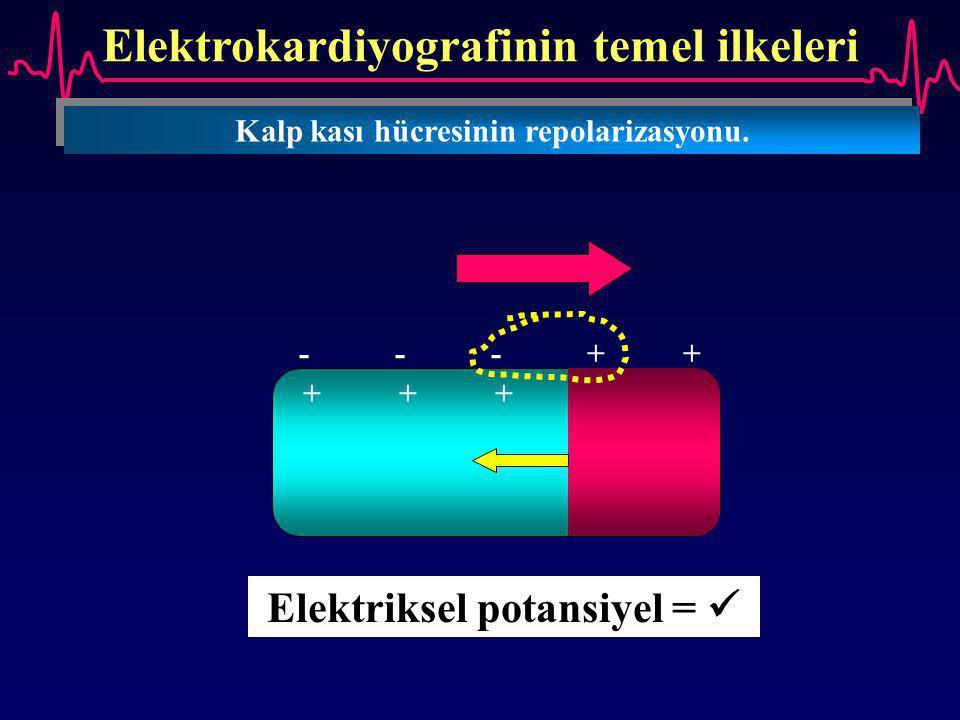Elektrokardiyografinin temel ilkeleri Kalp kası hücresinin repolarizasyonu. ---++---++ +++--+++-- Elektriksel potansiyel =