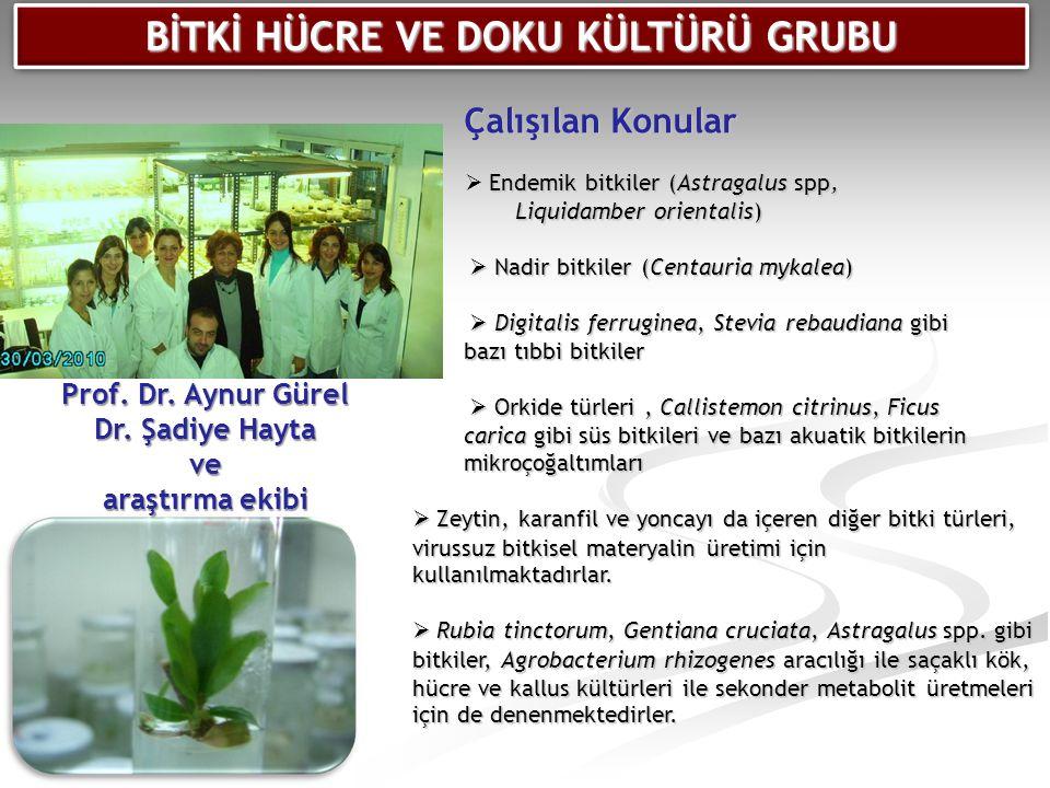 Çalışılan Konular  Endemik bitkiler (Astragalus spp, Liquidamber orientalis)  Endemik bitkiler (Astragalus spp, Liquidamber orientalis)  Nadir bitk