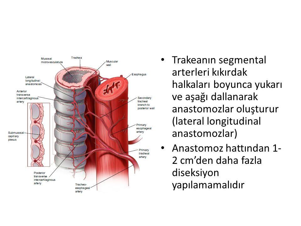 Trakeanın segmental arterleri kıkırdak halkaları boyunca yukarı ve aşağı dallanarak anastomozlar oluşturur (lateral longitudinal anastomozlar) Anastomoz hattından 1- 2 cm'den daha fazla diseksiyon yapılamamalıdır