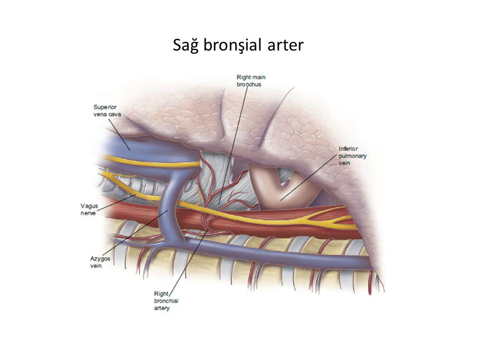 Sağ bronşial arter