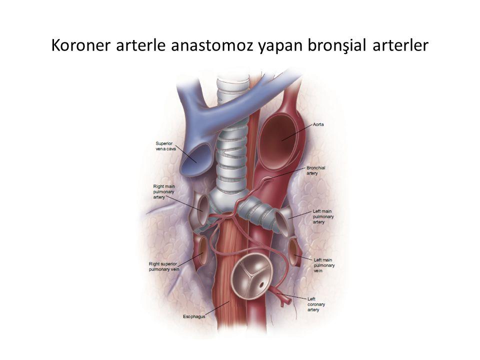 Koroner arterle anastomoz yapan bronşial arterler